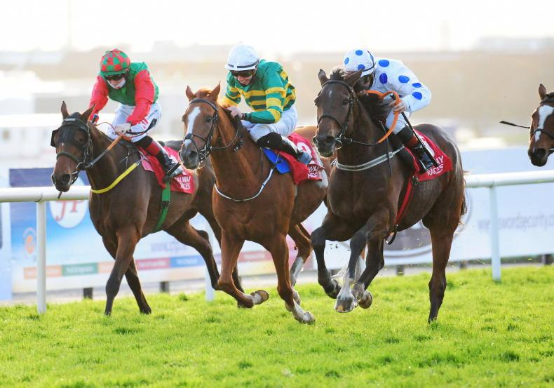 GALWAY MONDAY: Ewing excels again with 152/1 double