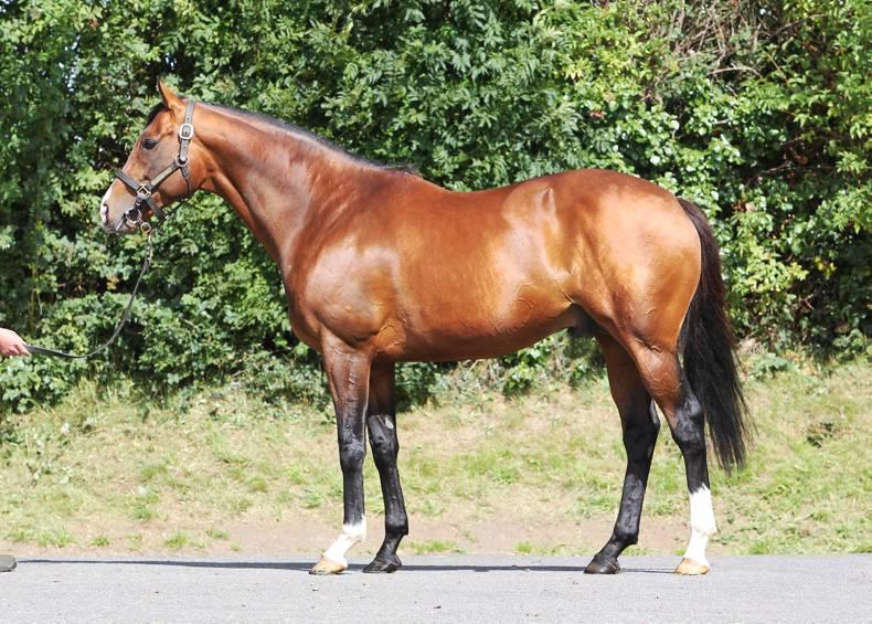 SIRE REVIEW: Company has made a Fast start to his stud career
