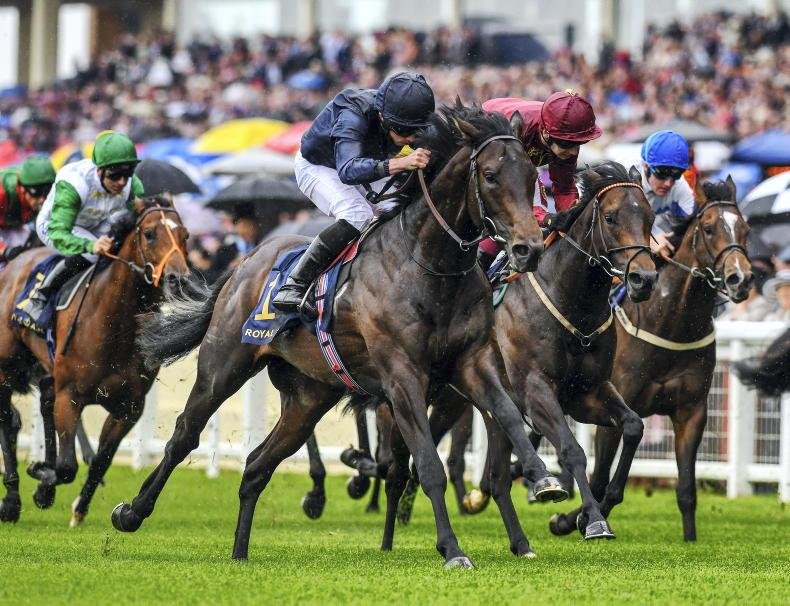NEWS: Arizona to stand at Castlehyde Stud for 2021