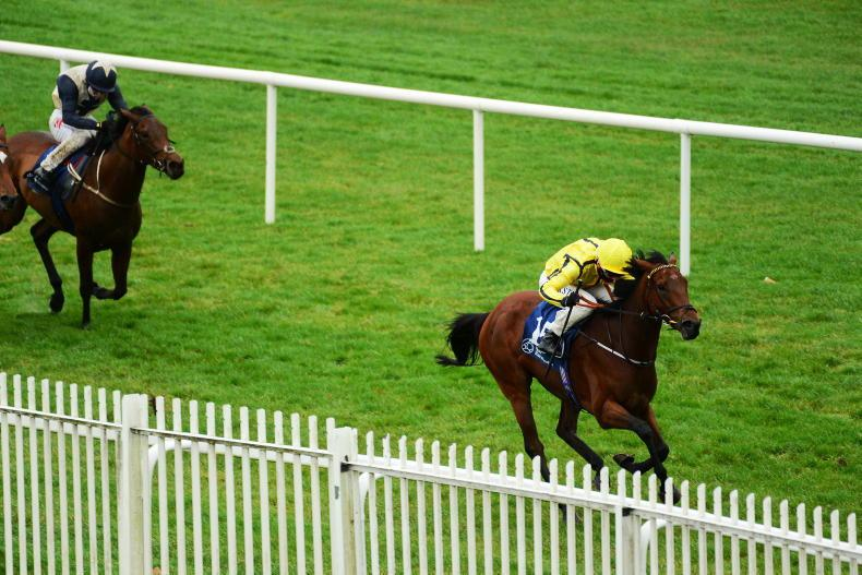 NAAS SUNDAY: Thanks too good for Haggas and Hayes