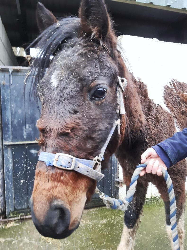 NEWS: ISPCA launch free online Will service