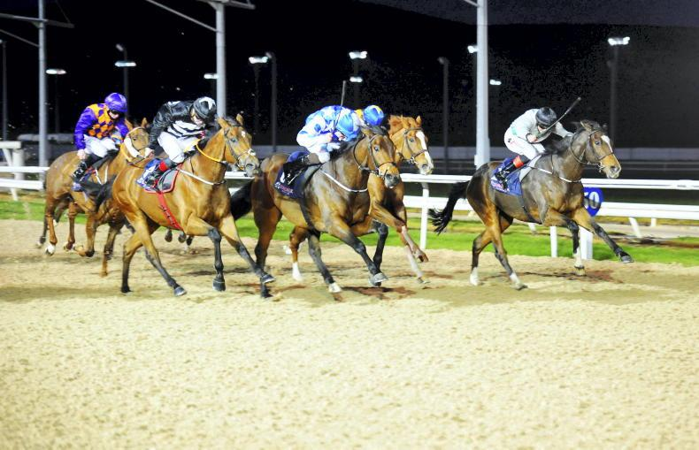 Ryan McElligott's five horses to follow
