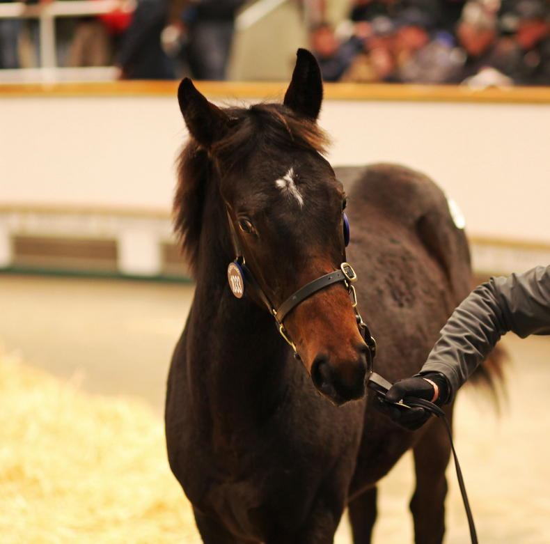 NEWS: Tattersalls December Sale goes ahead