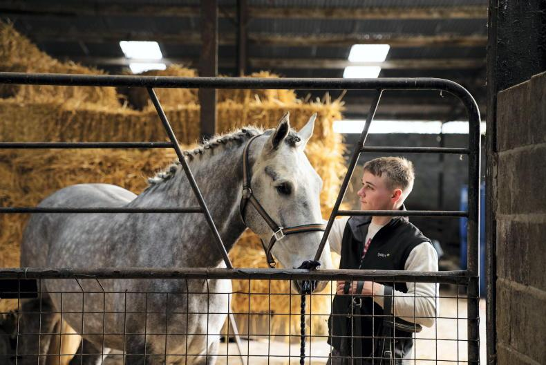 PONY TALES: O'Flynn leads charge to digitise horse world