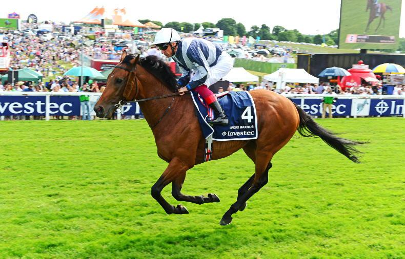 NEWS: Circus Maximus retired to Coolmore Stud