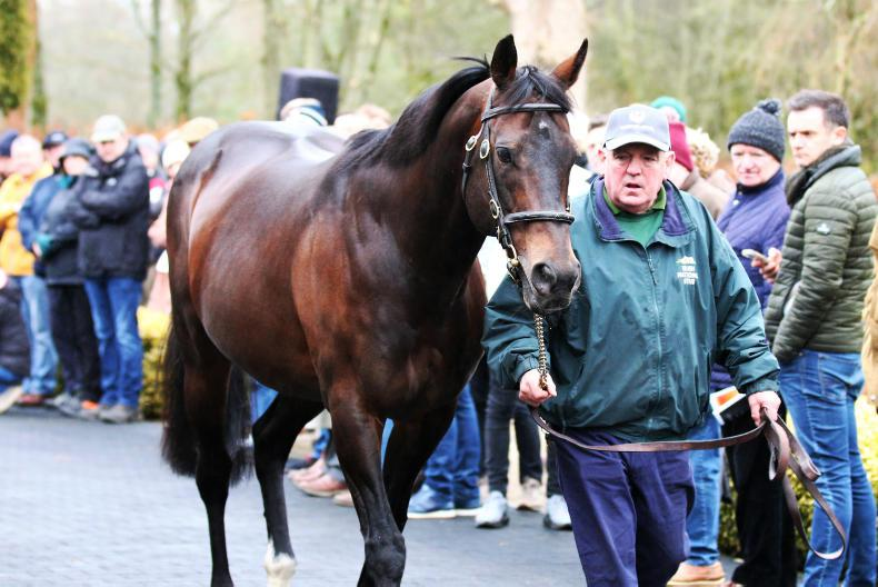 Irish National Stud announce significant reductions in fees