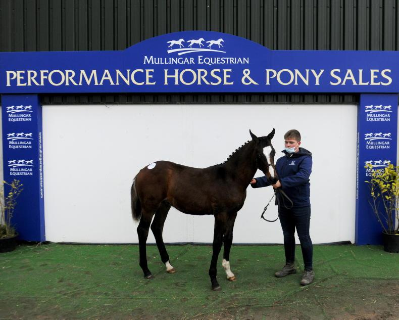 <h1>Horses For Sale in Ireland from The Irish Field </h1>