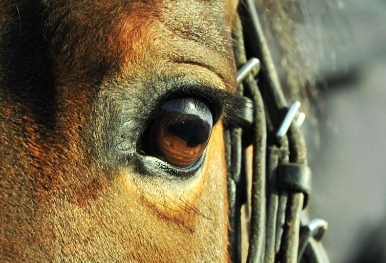 HORSE SENSE: What can our horse's eyes tell us?