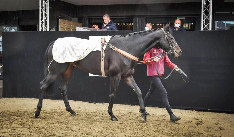 ARQANA AUTUMN SALE: Market realities hit hard at Arqana