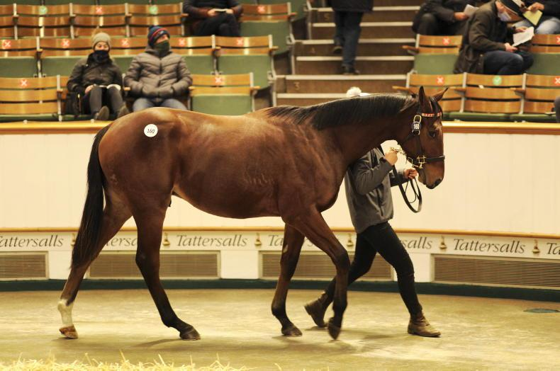 TATTERSALLS DECEMBER YEARLING SALES: Stars aplenty in sold yearling trade