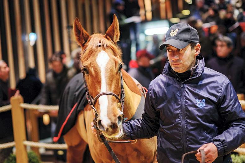 SALE: Your chance to buy into top French pedigrees