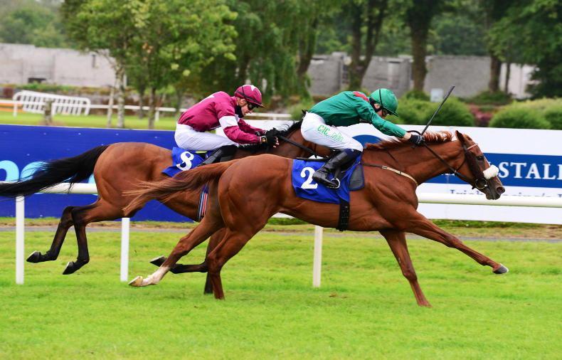 SALES: Joseph O'Brien buys Aga Khan prospect for €165,000