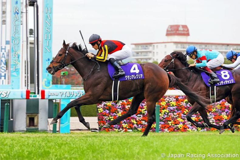 JAPAN: Gran Alegria is the nation's top sprinter and miler
