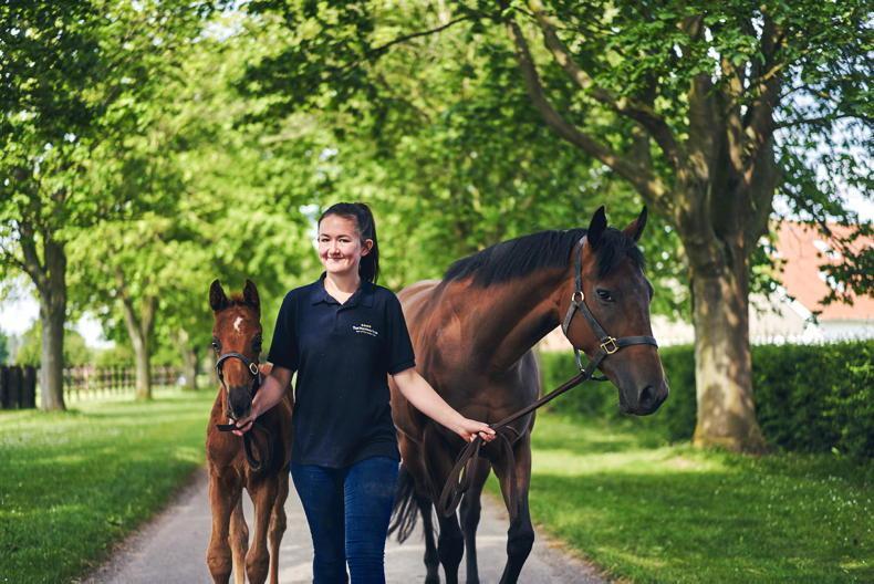 HORSE SENSE: Kickstart your career at The National Stud
