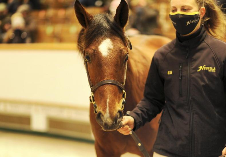 TATTERSALLS DECEMBER FOAL SALE: Sea The Stars and son shine brightly