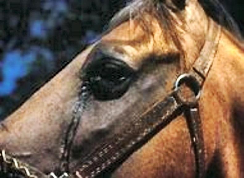 HORSE SENSE: Vigilance is key in preventing EVA
