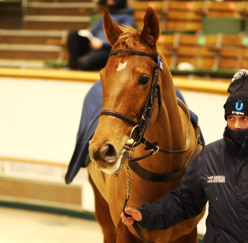SALES: Paddy Twomey aiming to improve 310,000gns purchase