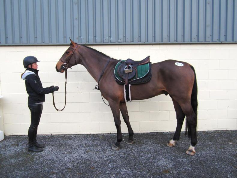 GORESBRIDGE SALES: O'Donnell signs for €12,800 sale-topper