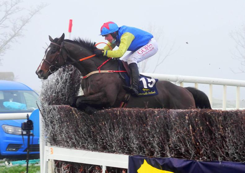 POINT-TO-POINT RATINGS: My Mate Mozzie makes good impression