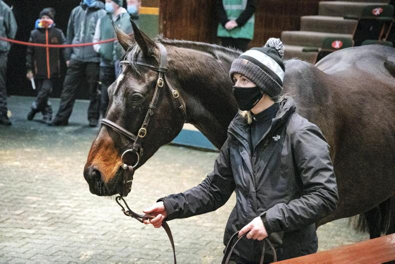 SALES: Apple's Jade sold for €530,000 at Goffs