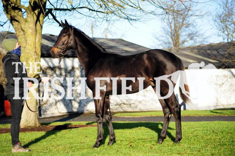 SALES: €85,000 foal heads bright start at Tattersalls Ireland