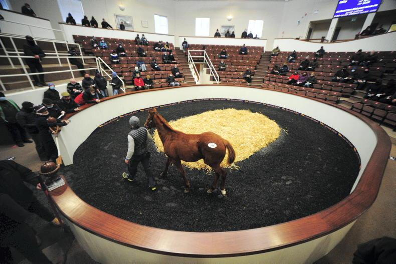 SALES: Laurina sold for €290,000 at Tattersalls Ireland