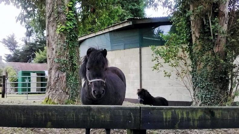 PONY TALES: Support the IHWT 2021 calendar