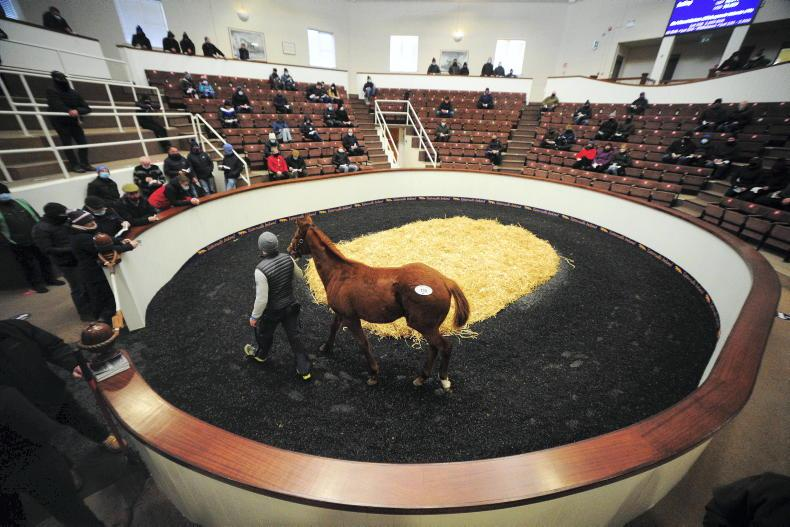 TATTERSALLS IRE NH SALE: Remarkable trade for foals
