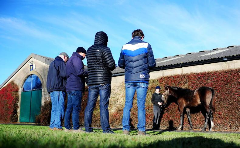 TATTERSALLS NH SALE: Comments and selected lots