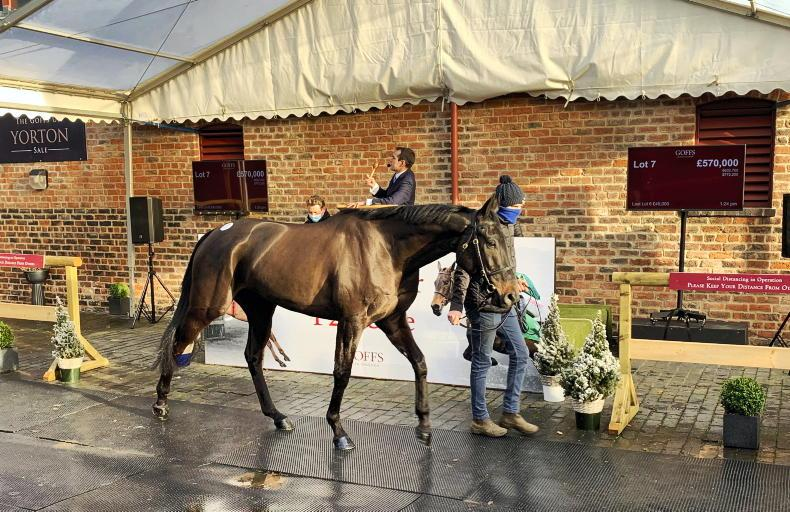 GOFFS UK DECEMBER P2P SALE: World record priced equalled by Classic Getaway