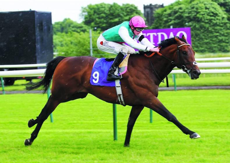 SIRE REVIEWS: Dare to dream with the sublimely-bred Morpheus