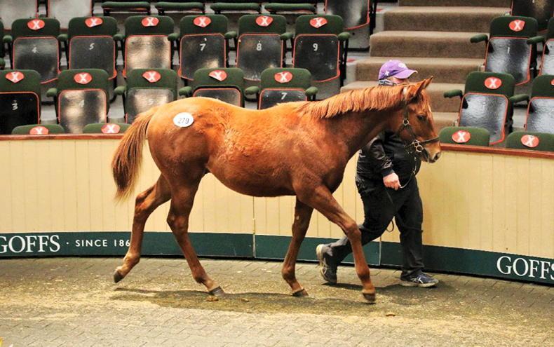 SALES: Quiet start to flat foal sale at Goffs