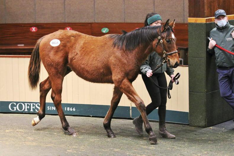 GOFFS NOVEMBER FOAL SALE: Trio of €440,000 Frankel foals top trade at Goffs