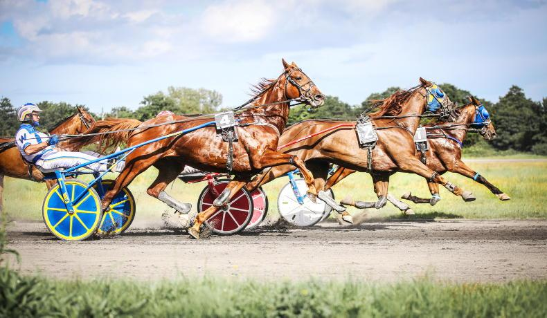 REVIEW 2020: Harness Racing: Smaller stables get a time to shine