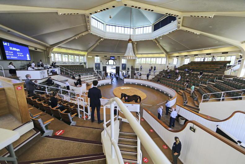 REVIEW 2020: Yearling trade holds up though Goffs takes some pain