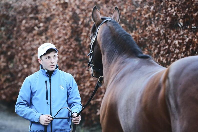 STALLION SHOWCASE: 'Keep doing things right and stay lucky'