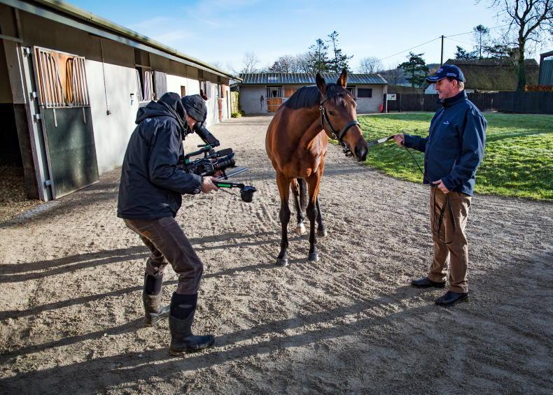 STALLION SHOWCASE: Take a virtual tour of Ireland's outstanding stallion farms