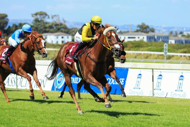 SOUTH AFRICA: Irish-bred Queen is Supreme again
