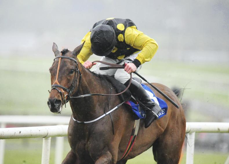 HORSES TO FOLLOW: Watching out for future winners