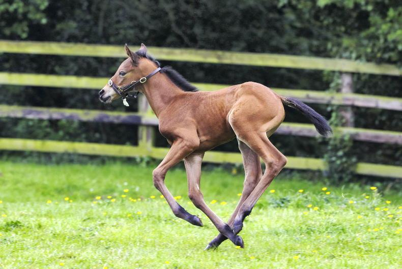 PARROT MOUTH: Snap your fab new foal