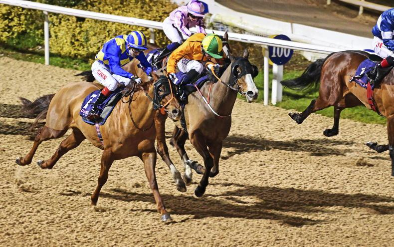 DUNDALK FRIDAY: Glorious Zoff preps for the Cotswolds