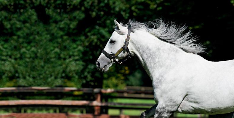 BREEDING INSIGHTS: Death of Dalakhani, an Aga Khan Studs' favourite