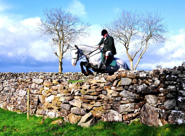 HUNTING PROFILE: The Donohue legacy - tradition and expertise