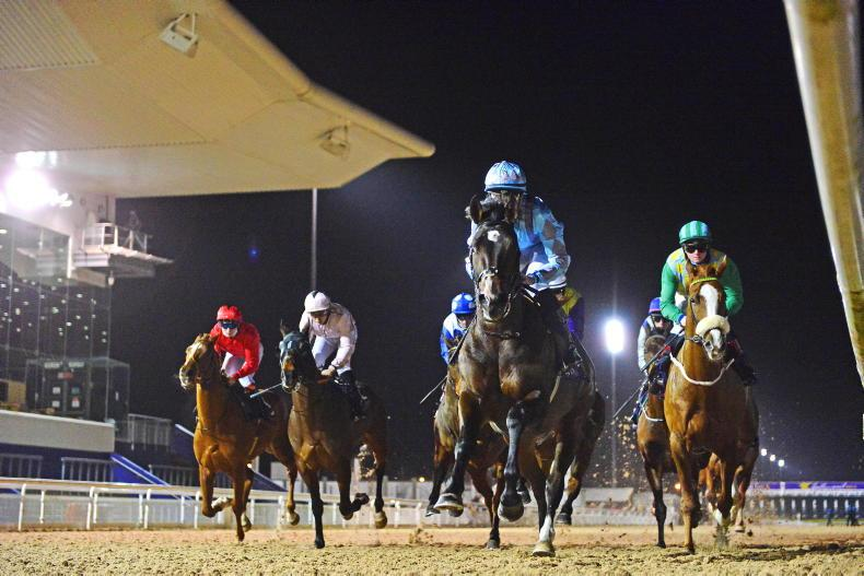 SALES: Fillies from top studs star in online catalogue