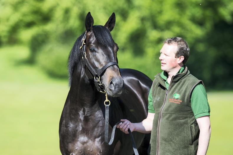 SIRE REVIEWS: Standing at Gilltown Stud: HARZAND (IRE)