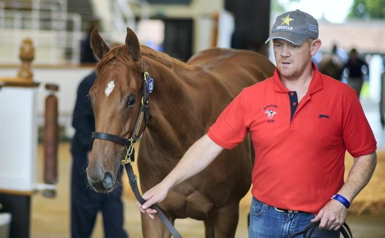 Who will be the champion first season sire in 2021?