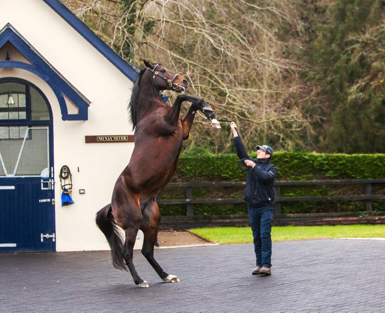 SIRE REVIEWS: Standing at Coolmore Stud: Camelot