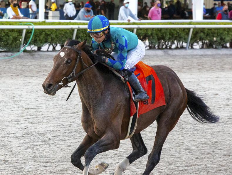AMERICA: Greatest Honour sets out on Derby trail