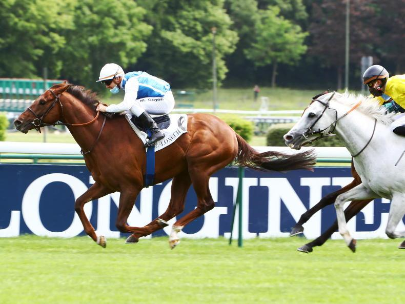 SIRE REVIEWS: Standing at Yeomanstown Stud: Shaman