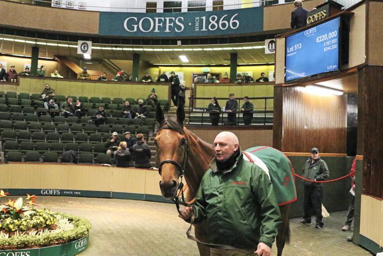 SALES: Goffs kicks off new year of sales
